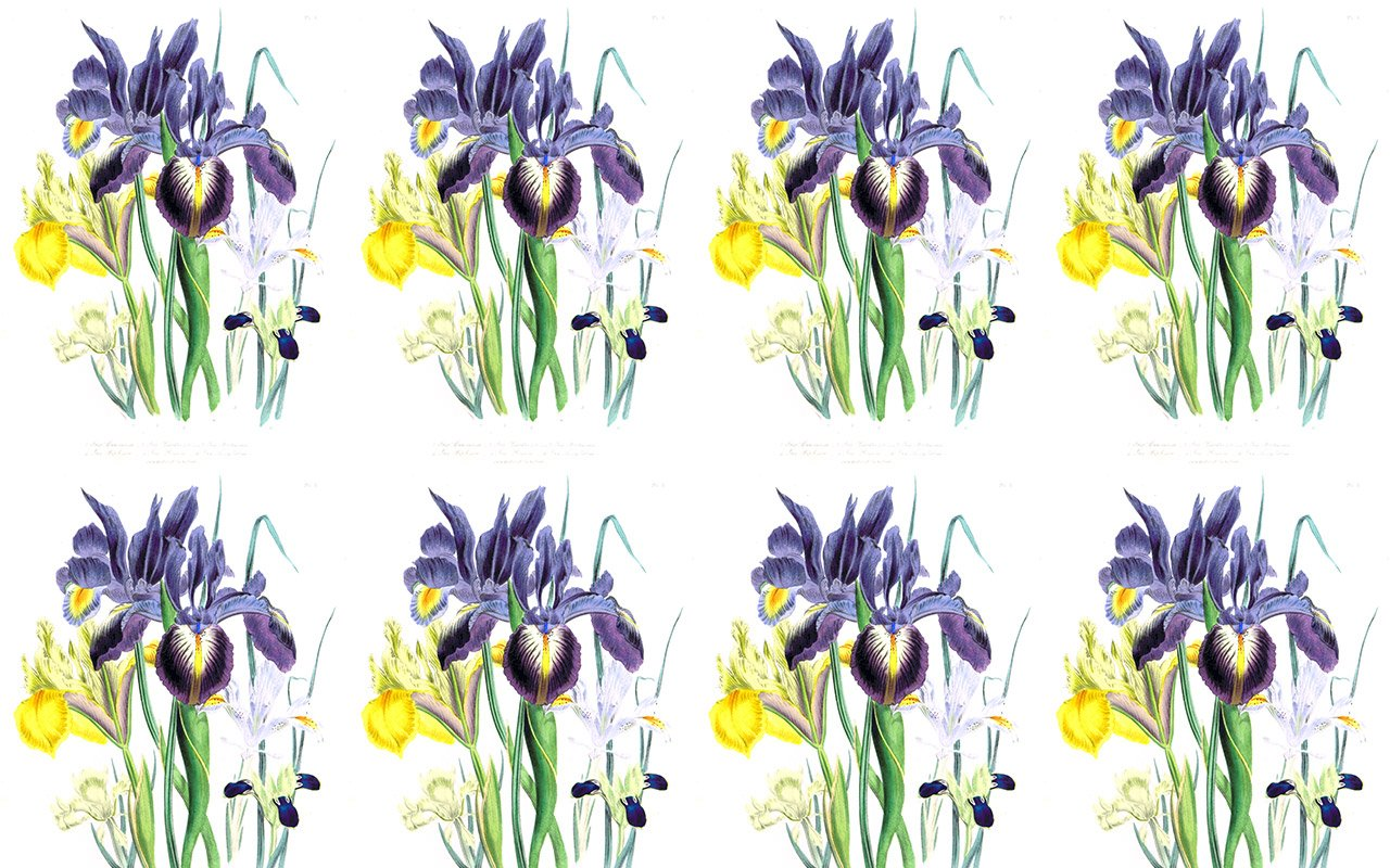 Iris Botanical Regular Repeat