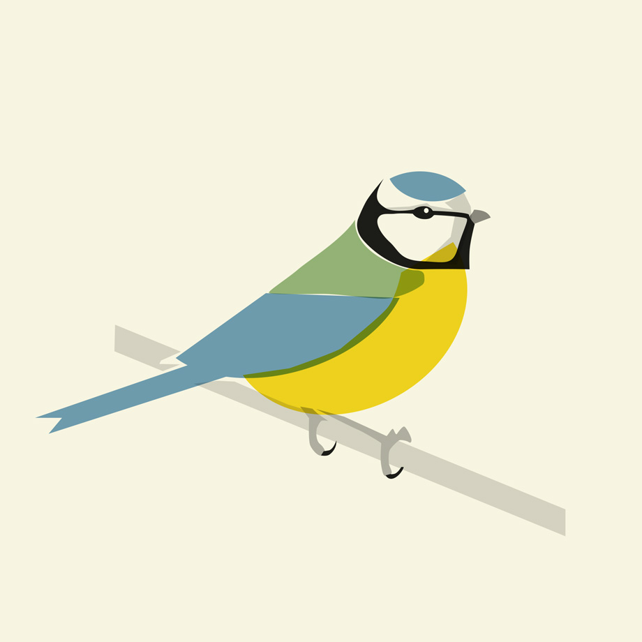 Plain Blue Tit